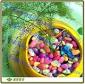盆栽装饰彩石